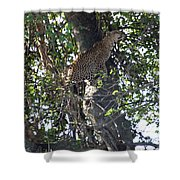 Leaping Leopard Shower Curtain
