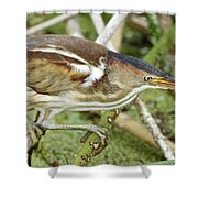 Least Bittern Female Feeding Shower Curtain