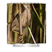 Least Bittern Pictures 14 Shower Curtain
