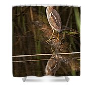 Least Bittern Pictures 17 Shower Curtain