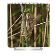 Least Bittern Pictures 22 Shower Curtain