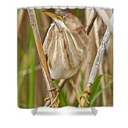 Least Bittern Pictures 35 Shower Curtain