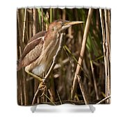 Least Bittern Pictures 7 Shower Curtain