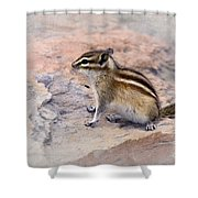 Least Chipmunk #2 Shower Curtain