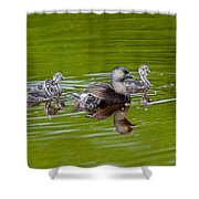 Least Grebe And Young Shower Curtain