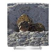 Least Tern Hatchling Shower Curtain