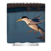 Least Tern In Flight Shower Curtain