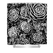 Leaves And Succulents Shower Curtain