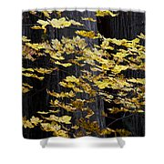Leaves And Trees Shower Curtain
