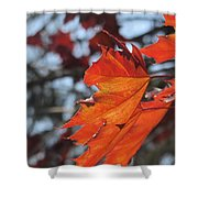 Leaves Backlit 3 Shower Curtain