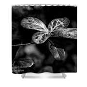Leaves - Bw Shower Curtain