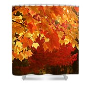 Fall Leaves In Afternoon Sun Shower Curtain