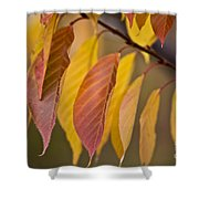 Leaves In Fall Shower Curtain