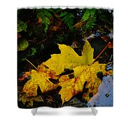 Leaves In Still Shallows Shower Curtain