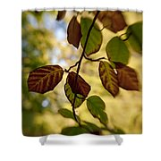 Leaves In The Breeze Shower Curtain