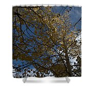 Leaves In The Sky Shower Curtain