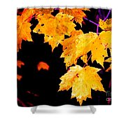 Leaves Of Maple Shower Curtain