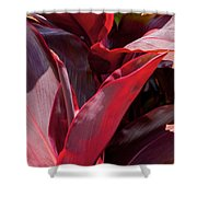 Leaves Of The Red Ti Plant Shower Curtain