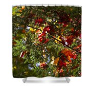 Leaves On Evergreen Shower Curtain