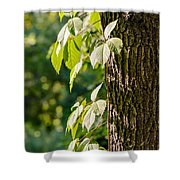 Leaves Under The Sun Shower Curtain