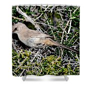 Lecontes Thrasher In Bush Shower Curtain