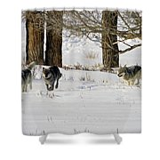 Legends Of The Lamar Valley Shower Curtain