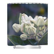 Lei Pua Kalaunu - Crown Flower - Calotropis Gigantea - Asclepiad Shower Curtain