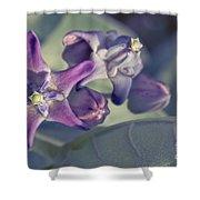 Lei Pua Kalaunu - Crown Flower - Calotropis Gigantea Shower Curtain