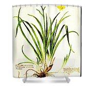 Lemon Daylily Botanical Shower Curtain