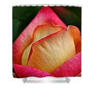 Lemon Raspberry Rosebud Shower Curtain
