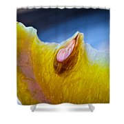 Lemon Seed Shower Curtain