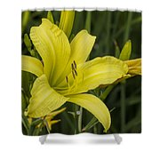 Lemon Yellow Daylily Blossom Shower Curtain