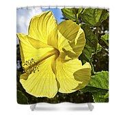Lemon Yellow Hibiscus Shower Curtain