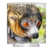 Lemur 004 Shower Curtain