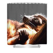 Lemur Lounging Shower Curtain