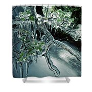 Lenga Beech Nothofagus Pumilio Shower Curtain