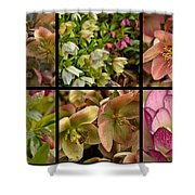 Lenten Rose Collage Shower Curtain