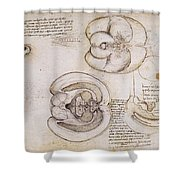 Leonardo: Ventricles, C1508 Shower Curtain