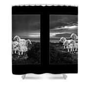 Leopard Appaloosa  Shower Curtain