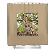 Leopard Cub Gaze Shower Curtain