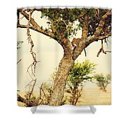 Leopard Eating His Victim On A Tree In Tanzania Shower Curtain