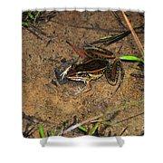 Leopard Frog Shower Curtain