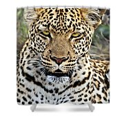 Wild Leopard In Botswana Shower Curtain