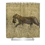 Leopard On The Move Shower Curtain