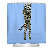 Leopard Panthera Pardus Shower Curtain