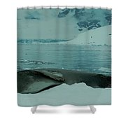 Leopard Seal Hauled Out Shower Curtain