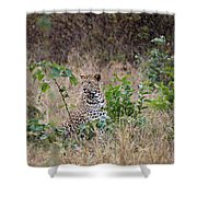 Leopard Sits Shower Curtain