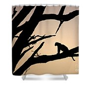 Leopard Sitting In A Tree Shower Curtain