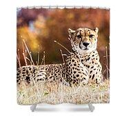 Leopard Watching Shower Curtain