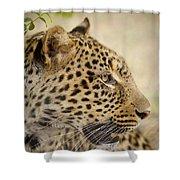 Leopard Zimbabwe Shower Curtain